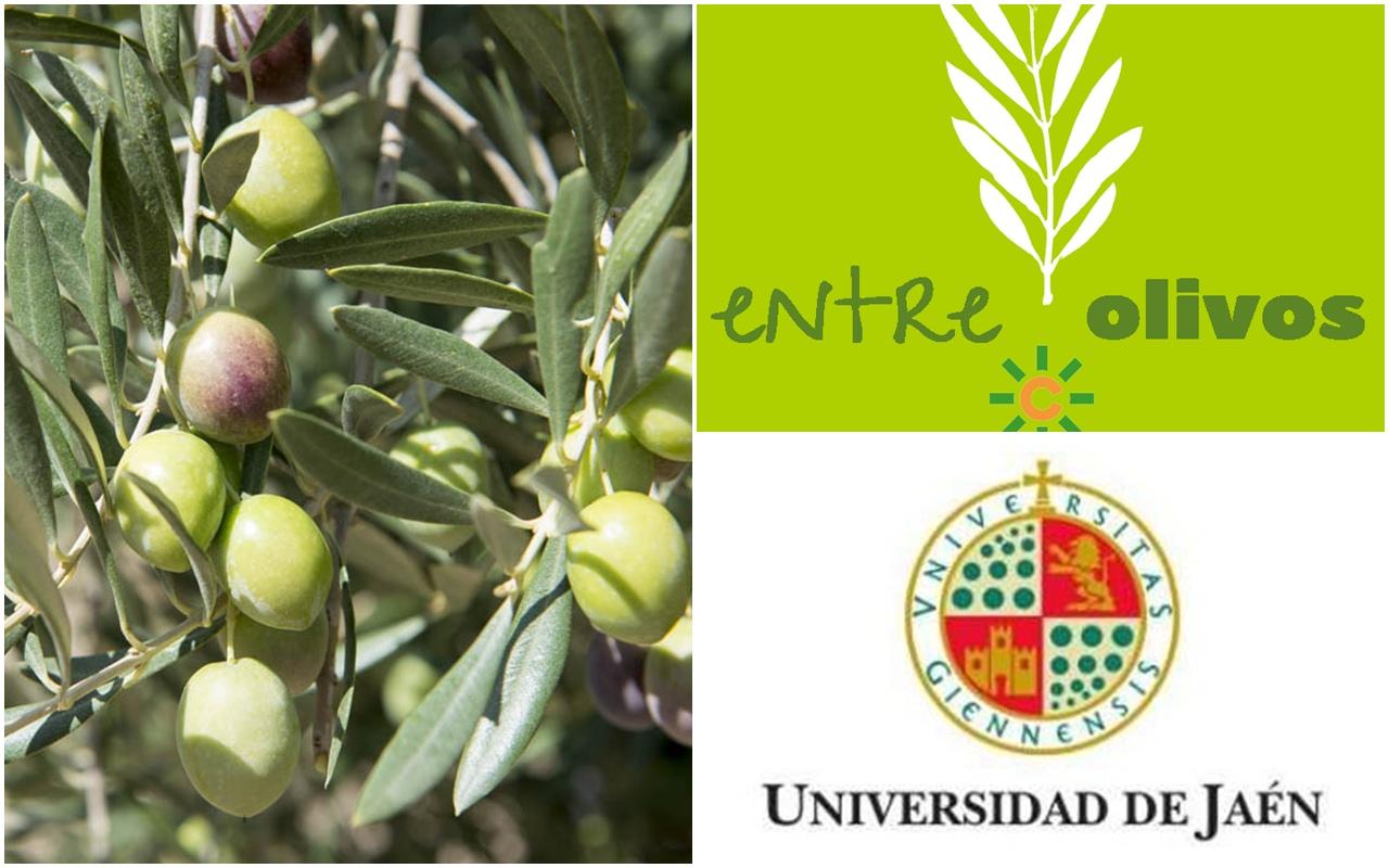 Nueva investigación sobre AOVE y Salud de la Universidad de Jaén