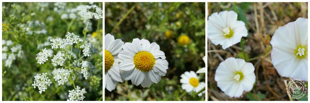flores nobleza del sur 5
