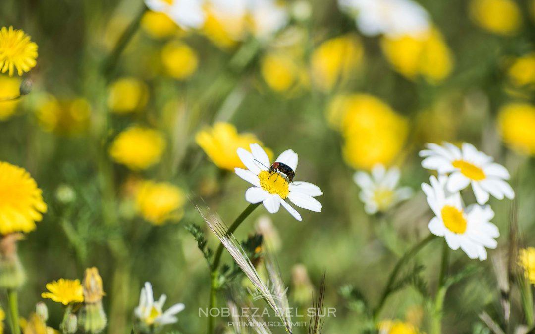 El campo del olivar, rodeado de flores